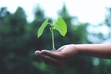 person-holding-a-green-plant-1072824